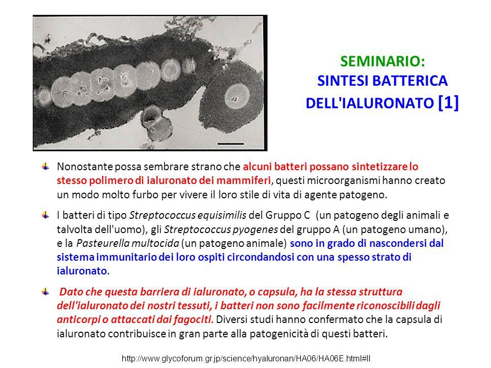 SEMINARIO: SINTESI BATTERICA DELL IALURONATO [1]